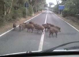 Fauna selvatica: «richiesto intervento straordinario»