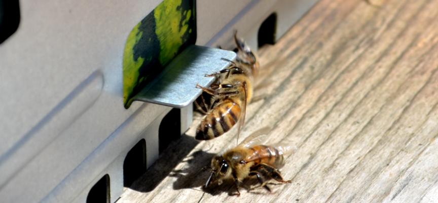 Parte il corso di apicoltura