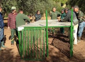 Iniziato il posizionamento delle gabbie per i cinghiali