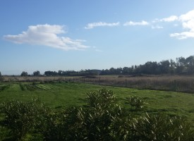 Comitato zonale Nurra: lettera al presidente dimissionario