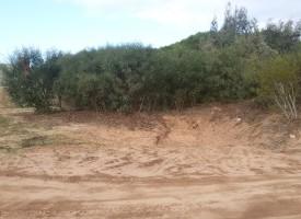 Prosegue l'asportazione di sabbia dietro il camping Porticciolo