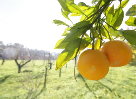 Sos per l'agrario di Santa Maria la Palma: appello alla Provincia di Sassari