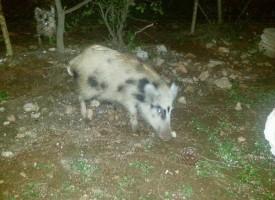 """Fauna selvatica, Comitato Maristella: """"le istituzioni garantiscano la sicurezza dei cittadini"""""""