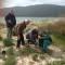 Anchusa sardoa messe a dimora nei giorni scorsi lungo il  litorale di Mugoni