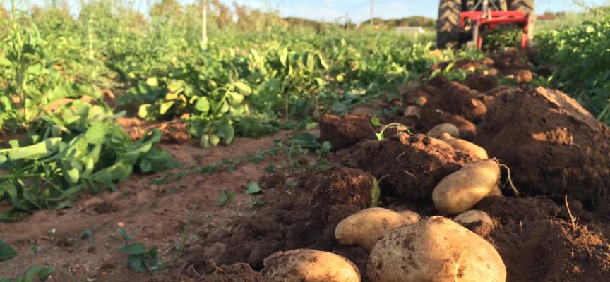 Nuova Legge sull'Agriturismo, lunedì incontro a Guardia Grande