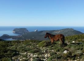 A Porto Conte la gara podistica e camminata popolare più spettacolari del nord Sardegna