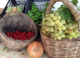 Produzioni agricole dell'agro: i comitati di borgata uniti per la promozione