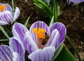 A Guardia Grande il Corso di introduzione all'analisi sensoriale del miele