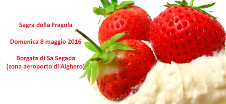 Tripudio di fragole domenica a Sa Segada. Arborea ci mette 25 chili di panna