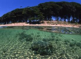 Pineta Mugoni: per una gestione e fruizione sostenibile
