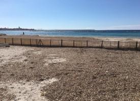 Posidonia oceanica, una risorsa chiamata problema